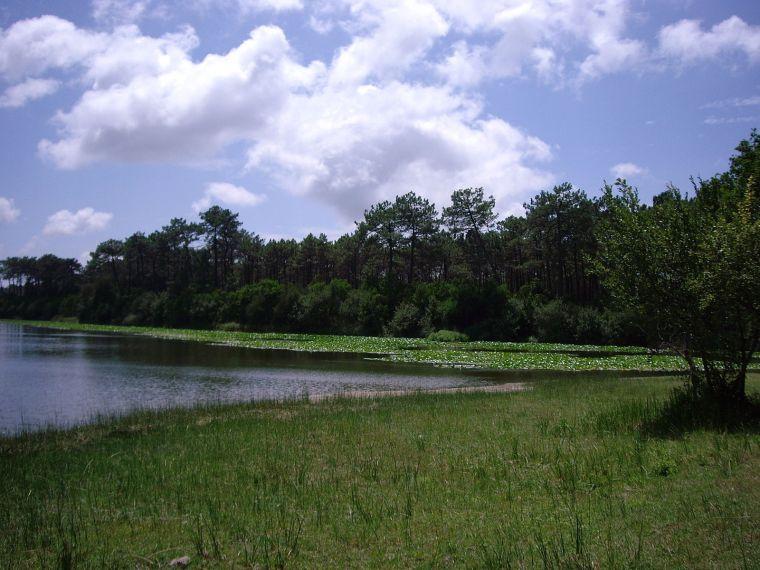 Lagoa_da_Vela_-_nenufar